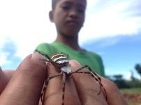Kids-Kid Holding Spider-Madden